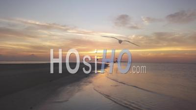Birds At Sea During Sunrise - Video Drone Footage