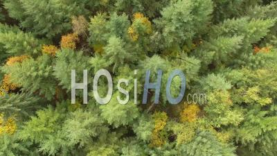 Forest Of Fir Trees In Isere, France – Aerial View By Drone