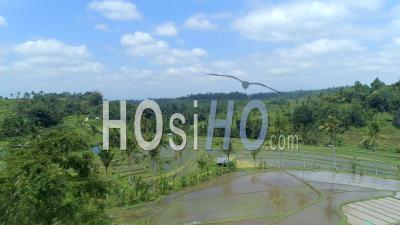 Rizière à Bali En Indonésie - Vidéo Drone