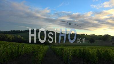 Sunrise Landscape Vineyard, Bordeaux Wineyard In Summer, Time Lapse