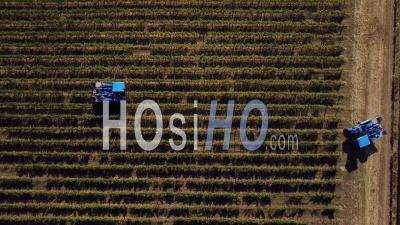 Récolte Mécanique Dans Le Vignoble - Vidéo Drone
