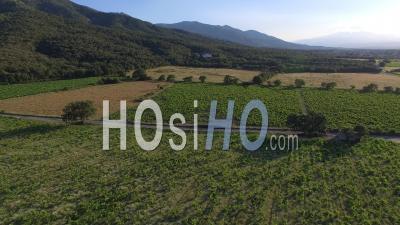 Vignoble à Argelès, Vidéo Drone