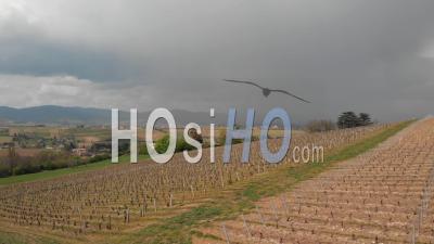 Vignobles Du Beaujolais - Vidéo Drone