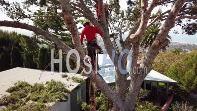 Vue Aérienne De Deux Tailleuses D'arbres Coupant Des Branches Dans Un Arbre Dans Un Quartier De Colline - Vidéo Drone