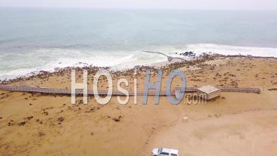 Vue Aérienne Sur La Colonie De Phoques De Cape Cross Sur La Côte Skeleton Coast, Namibi -Vidéo Drone