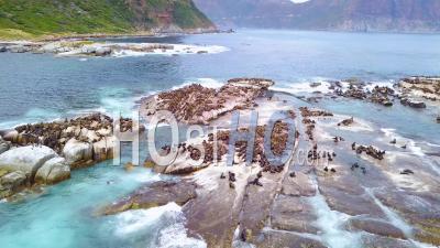 Vue Aérienne Sur Une Grande Colonie De Phoques Sur Une Petite île Au Large De La Côte Sud-Africaine.