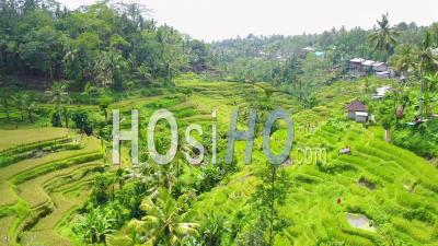 Aerial View Over Vast Terraced Rice Paddies Of Bali, Indonesia - Video Drone Footage
