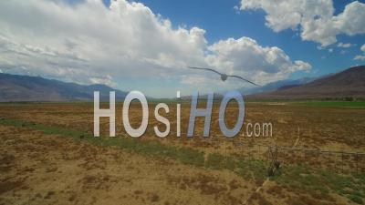 Aerial View Over The Dry Owens Valley Region Of California With Irrigation Lines In Foreground - Video Drone Footage