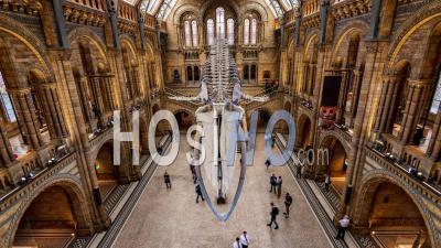 Le Musée D'histoire Naturelle à Londres