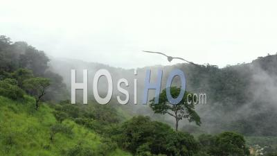 Vol D'oiseau De Proie Dans La Canopée De La Forêt Tropicale Vidéo Drone