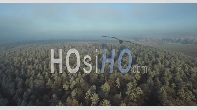 Frozen Landscapes, Alsace, France - Drone Point Of View