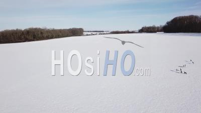 Group Of Deers Running On A Snowy Field, Viewed By Drone