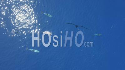Groupe De Dauphins Nageant Dans La Mer Méditerranée - Vidéo Drone