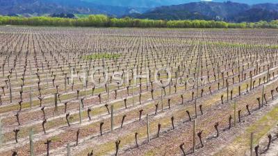 2019 - A Vineyard Farm Farmland On The South Island Of New Zealand Wine Making Region - Aerial Video By Drone