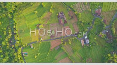 Zooming Out Of A Road Between Rice Terraces - Aerial Video By Drone