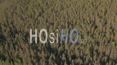 Vue Aérienne D'un Hélicoptère Volant Au-Dessus D'une Forêt De Sapins, Tackasen, Suède - Vidéo Drone
