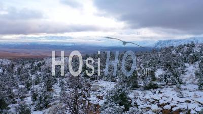 2020-Beautiful Aerial Over Frozen Trees Landscape And Snow Covered Mountain In Eastern Sierras Near Bishop, California. - Video Drone Footage