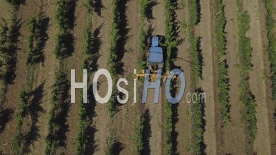 Tractor In Vineyard, Video Drone Footage