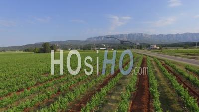 Vignoble Sur La Montagne Sainte-Victoire Au Printemps - Vidéo Drone
