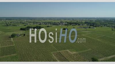 Vineyard Of Bourgueil, France, In A Spring Afternoon - Video Drone Footage