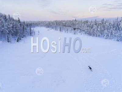 Aerial Drone Photo Of Reindeer At Christmas In The Frozen Cold Snow Covered Winter Landscape In Lapland In Finland