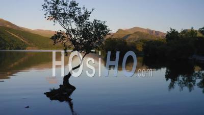 Réflexion Dramatique Du Lac De Silhouette D'arbre Isolé - Vue Panoramique Panoramique Sur Le Parc National De Snowdonia Au Pays De Galles - Vidéo Aérienne Par Drone