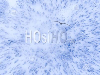 Aerial Drone Photo Of A White, Snow Covered Winter Forest Of Cold Trees In The Arctic Circle In Finnish Lapland, Finland