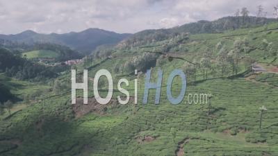 Paysage De Plantations De Thé Dans Les Montagnes. Vidéo Aérienne Par Drone