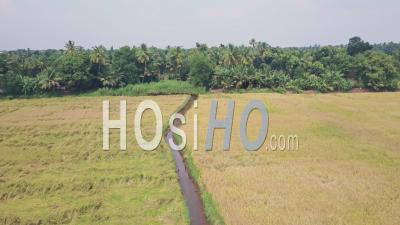 Backwaters Du Kerala, Terres Agricoles Et Champs à Alleppey, Inde. Prise De Vue Drone