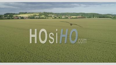 Cereals Fields - Video Drone Footage