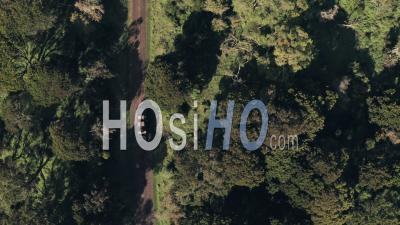 4 Wheel Drive Vehicle Driving Through Forest Scenery In Aberdare National Park, Kenya, Africa. Aerial Drone Top Down View