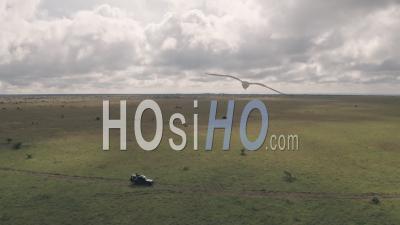 Homme Assis Au Sommet De 4 Roues Motrices Lors D'une Aventure De Safari Animalier Au Kenya. Vidéo Aérienne Par Drone