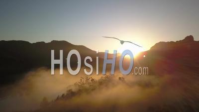 Forest Esterel Var Provence Alpes Cote D'azur France Fog Spring - Video Drone Footage