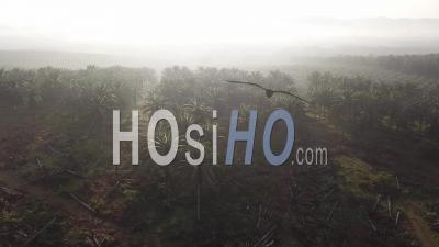 Aerial Drone Shot Land Clearing Of Oil Palm