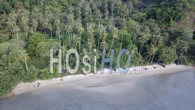 Aerial View Coconut Trees - Video Drone Footage