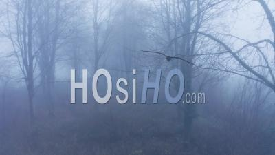 Aerial Drone Video Of Mysterious Misty Blue Foggy Woods With Bare Trees In Mist In Woodland In Winter, Spooky Haunted Forest Rural Scene, Cotswolds, Gloucestershire, England, United Kingdom