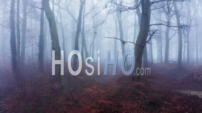 Aerial Drone Video Of Autumn Trees In Thick Fog Weather Conditions, Mysterious Woodlands Forest In Mist And Fog, Beautiful Nature Landscape Scenery In England, United Kingdom