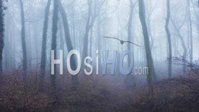 Vidéo Aérienne De Drone D'arbre Tombé Mort Dans Les Bois, Arbres D'hiver Mystérieux Et Forêts Avec Brume épaisse Et Brouillard, Belle Nature Avec Paysage De Paysage Brumeux Brumeux En Angleterre, Royaume-Uni
