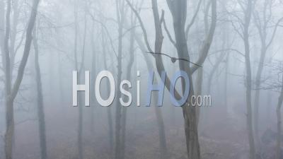 Vue Par Drone Vidéo De Bois Dans Des Conditions Météorologiques Brumeuses Et Brumeuses Avec Des Arbres Dans Des Forêts Bleues Mystérieuses Dans La Brume Et Le Brouillard, Belle Nature Et Paysage De Paysage Mystérieux En Angleterre, Royaume-Uni