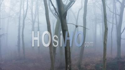 Vue Par Drone Vidéo De Bois Mystérieux Hantés Avec Des Arbres Fantasmagoriques Dans La Brume épaisse Et Le Brouillard, Forêt De Forêts Par Temps Brumeux Et Brumeux, Beau Paysage Naturel En Angleterre, Royaume-Uni