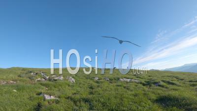 Crash D'un Drone Fpv Dans Les Alpes Françaises