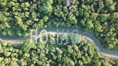 Aerial View Green Trees - Video Drone Footage