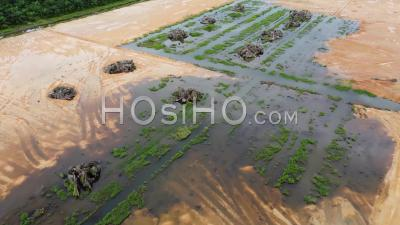 Aerial View Red Soil And Dead Oil Palm Tree - Video Drone Footage