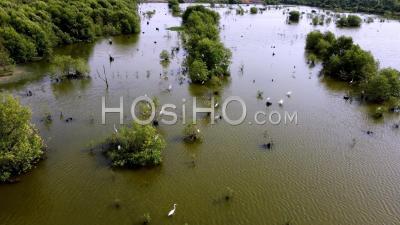 Fly Over Habitat Egret Bird In Swamp Area - Video Drone Footage