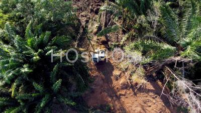 Aerial Look Down Excavator Clear The Dry Palm Tree - Video Drone Footage