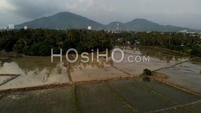 Rizière De Riz De Saison Inondée à Kampung Rural - Vidéo Par Drone