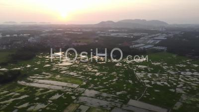 Aerial Sunset View Over Paddy Field In Penang - Video Drone Footage