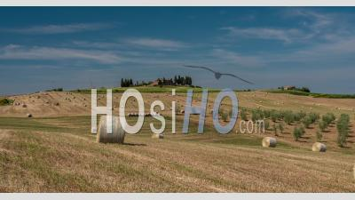 Panorama Of Tuscany Hills With Olive Trees And Yellow Field In Summer