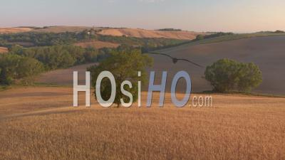 Aerial Landscape Of The D'orcia Valley In Tuscany With Green Hills And Yellow Fields On Summer - Video Drone Footage