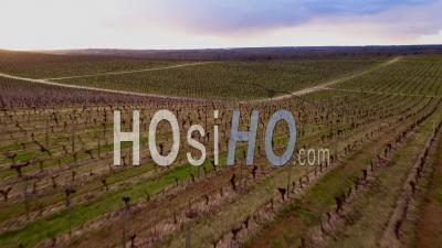 Vineyards Near Bordeaux In Winter, Vidéo Drone